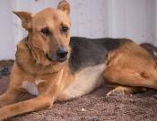 כרמיאל: הכלבה שחולצה מהמזבלה מחפשת בית