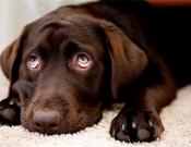 מסמר וכלב - סיפור קצר עם מוסר השכל גדול - שישי אישי מאת לודמילה פרידמן