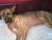 מגייסים תרומות לכלב שעבר התעללות בכפרים