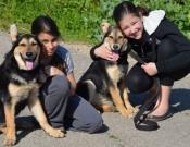 חדש: אתר לבחירת כלבים נטושים בצפון